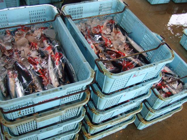 2007_0519uomasa0002.JPG